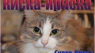 Киска-Ириска (КотоБлог)
