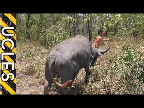 Water Buffalo (CAUGHT BAREHANDED) With Andrew Ucles & Adam Greentree