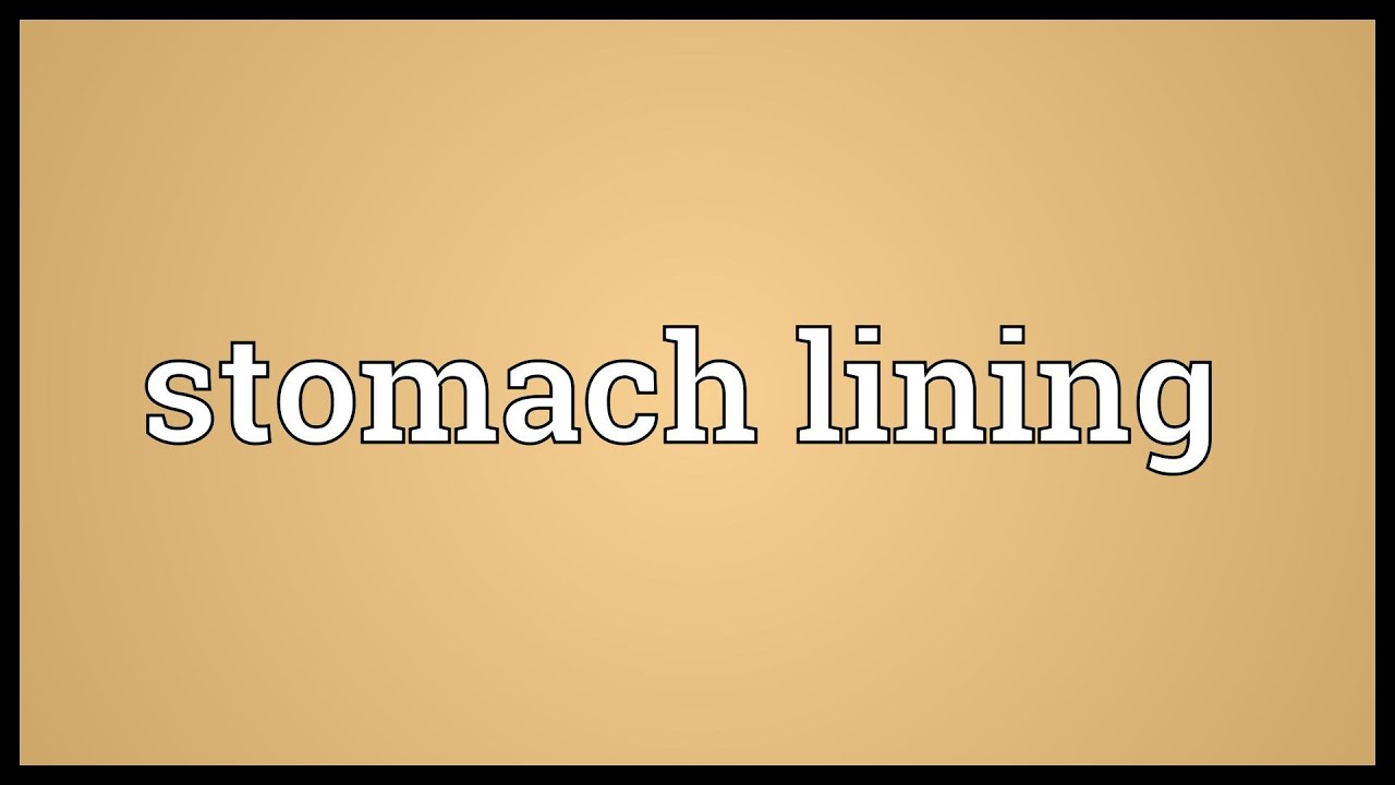 Stomach Lining Meaning Youtube