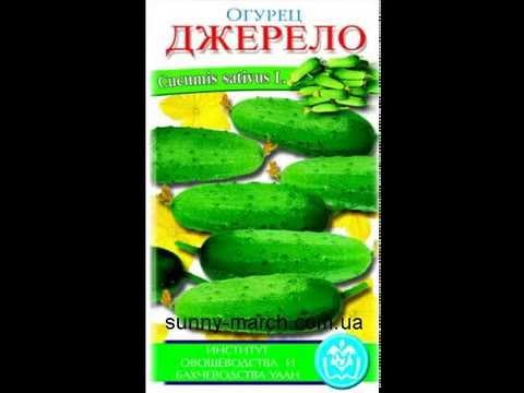 Семена огурцов оптом