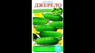 Семена огурцов оптом(, 2013-05-01T07:33:14.000Z)