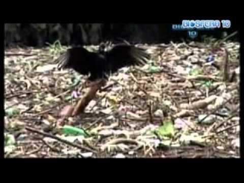 BIOSFERA 10  Degradación en  El Arbol de Navidad   en el Cañón del Sumidero