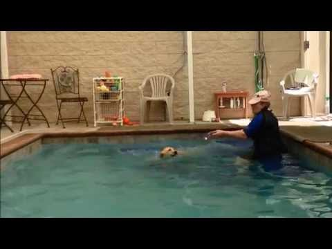 Motiv K9 Fitness Therapy Riya Puppy First Swim Lesson June 2014