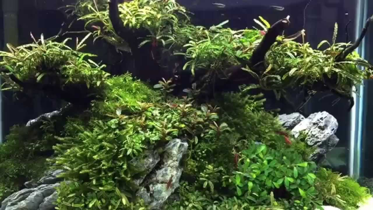 Low Maintenance Aquascape By Artquascape