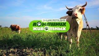 Энциклопедия домашних животных №19 - Роменские гуси