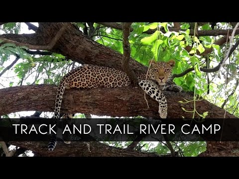 Track and Trail River Camp - Zambia