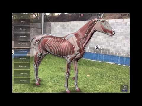 3d Horse Anatomy Software: Arkit Mode