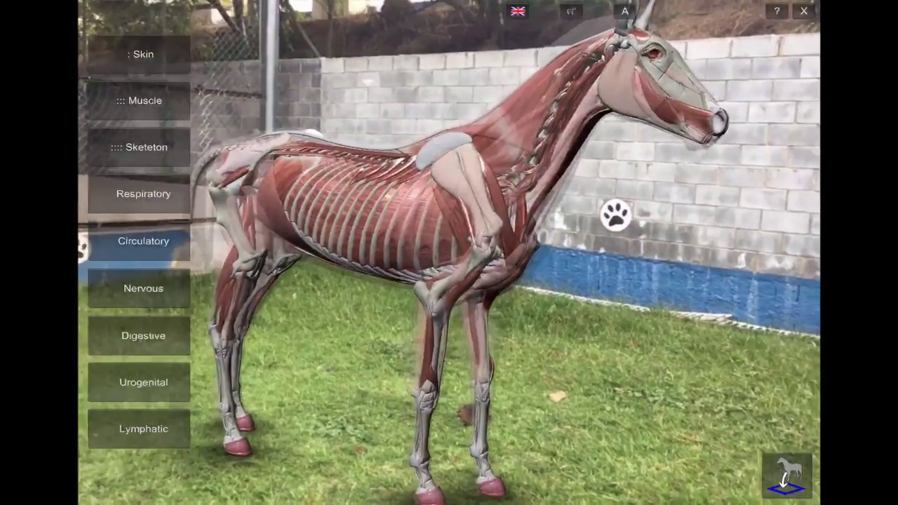 3D Horse Anatomy Software: Arkit Mode - YouTube
