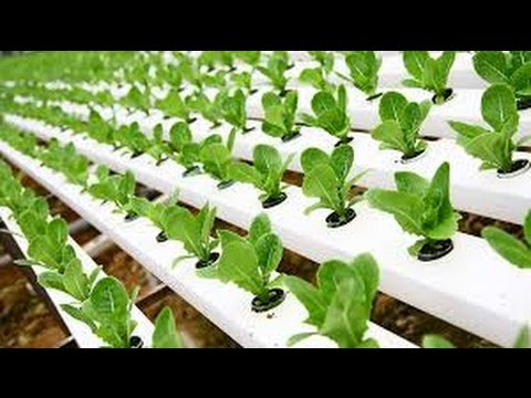 Hydroponic Gardening Grow Organic Plants Fast YouTube