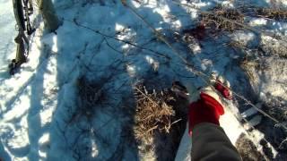Охота на зайца капканами зимой