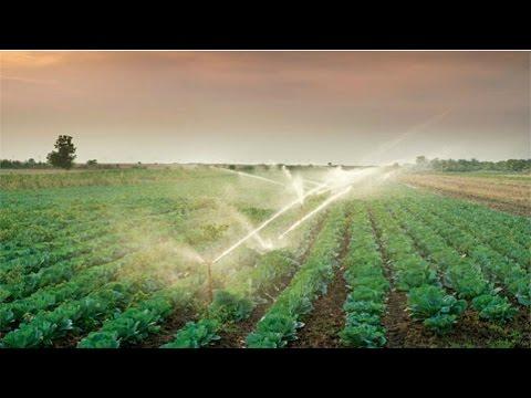 Cultivo Orgânico de Hortaliças - Irrigação
