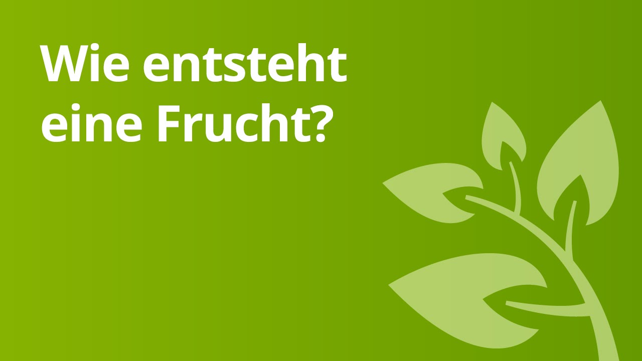 Die Kirsche: Von der Blüte zur Frucht | Biologie | Pflanzen und ...