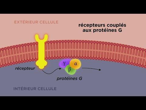 MOOC côté cours: Les différents types de récepteurs cellulaires