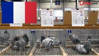 France, Francja - Olimpiada Gołębi, Olympiades de pigeons - Poznań 2019