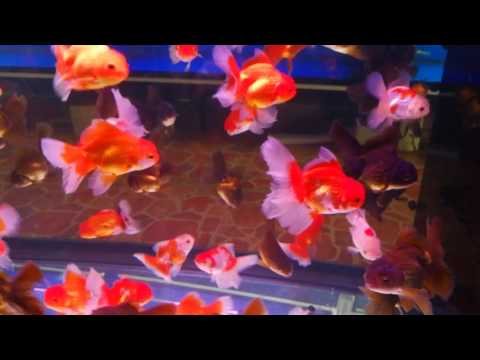 A Trip to Chatuchak Fish Market (Part 1) – The fishes at the biggest