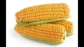 Как и сколько варить молодую кукурузу.