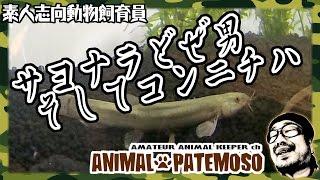 アニマル・パテモソは基本的にペットショップには行かず 生体を含めイン...