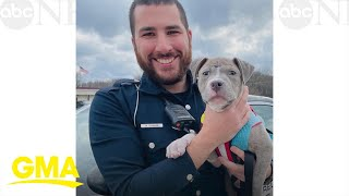 Фото Police Officer Adopts An Adorable Pit Bull Puppy L GMA Digital