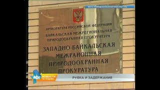 Задержан заместитель министра лесного комплекса региона по делу о вырубке на 880 млн рублей