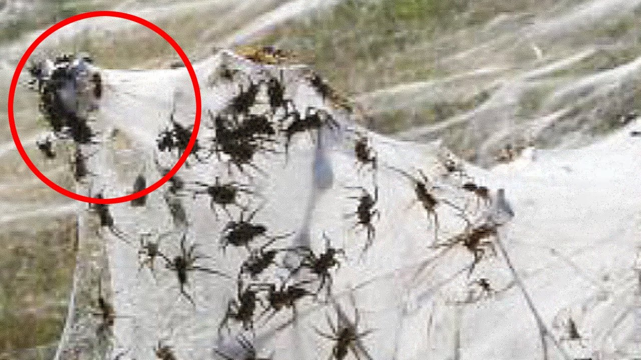 Frightening creatures found in nature