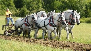 2013 National Horse Plowing Contest