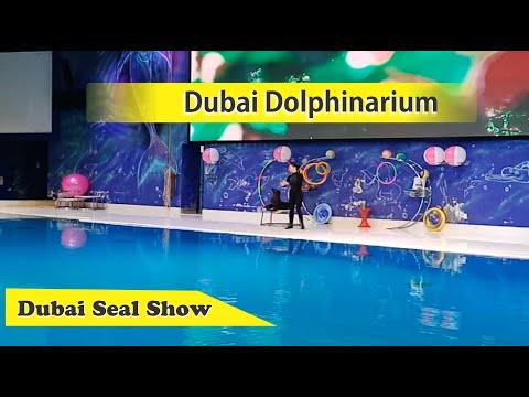 Seal Live Performing | Dubai Dolphinarium, UAE | Himani Gupta