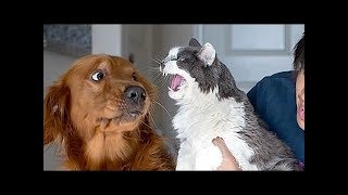 You Should have to a Pet To enjoy- Funny Animals Complication #7