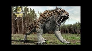 Best Documentary Wildlife Youtube 2019 Nat Geo Wild Nature Animal Discovery Channel Animals 2019
