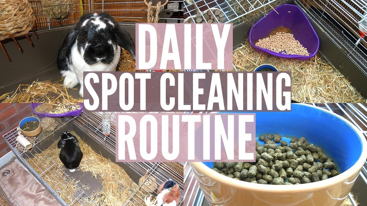 DAILY RABBIT SPOT CLEANING ROUTINE   RosieBunneh