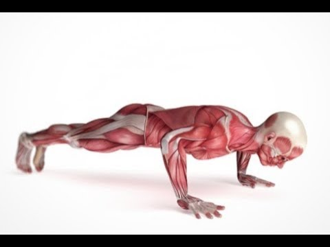 8 Simple Exercises For Anybody to Get In Shape Very Fast