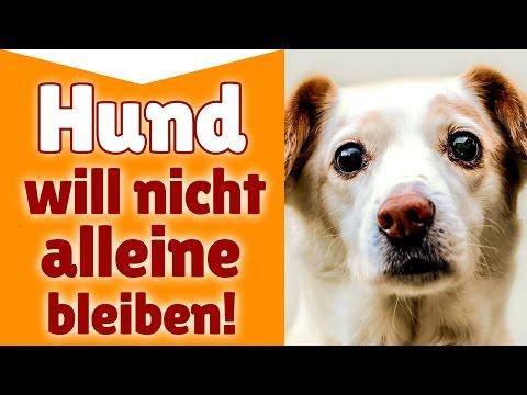 Hund will nicht alleine bleiben ►►  Wie lernt mein Hund alleine zu bleiben?