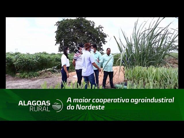 Cooperativismo e força de Vontade fazem de Pindorama a maior cooperativa agroindustrial do Nordeste