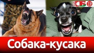 Что делать с агрессивной собакой