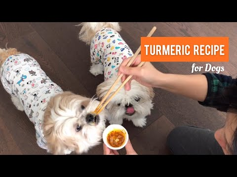 [shih Tzu] Turmeric Recipe For Dogs