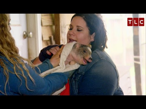 Babs and Whitney Get a Piglet | My Big Fat Fabulous Life