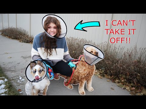 24 Hours Wearing A DOG CONE?!