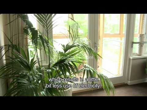 English - Environmental sustainability (A1-A2 - with subtitles)