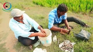 Natural Fertilizer | Preparation of Meenamrutham (Fish Amino Acid)