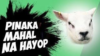 5 PINAKA MAHAL NA HAYOP SA BUONG MUNDO | Kaalaman