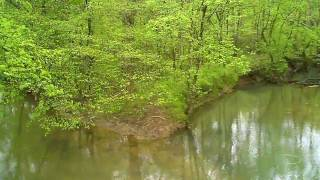 Rainy spring morning on Robinson Creek, Jackson County, Ala.