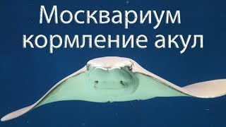 Смотреть видео Москвариум. ВДНХ. Москва. Развлечения в Москве. онлайн
