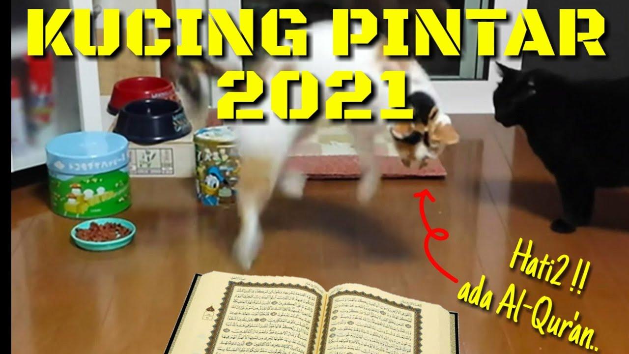 Nama Islami Untuk Kucing Tahun 2020 Youtube
