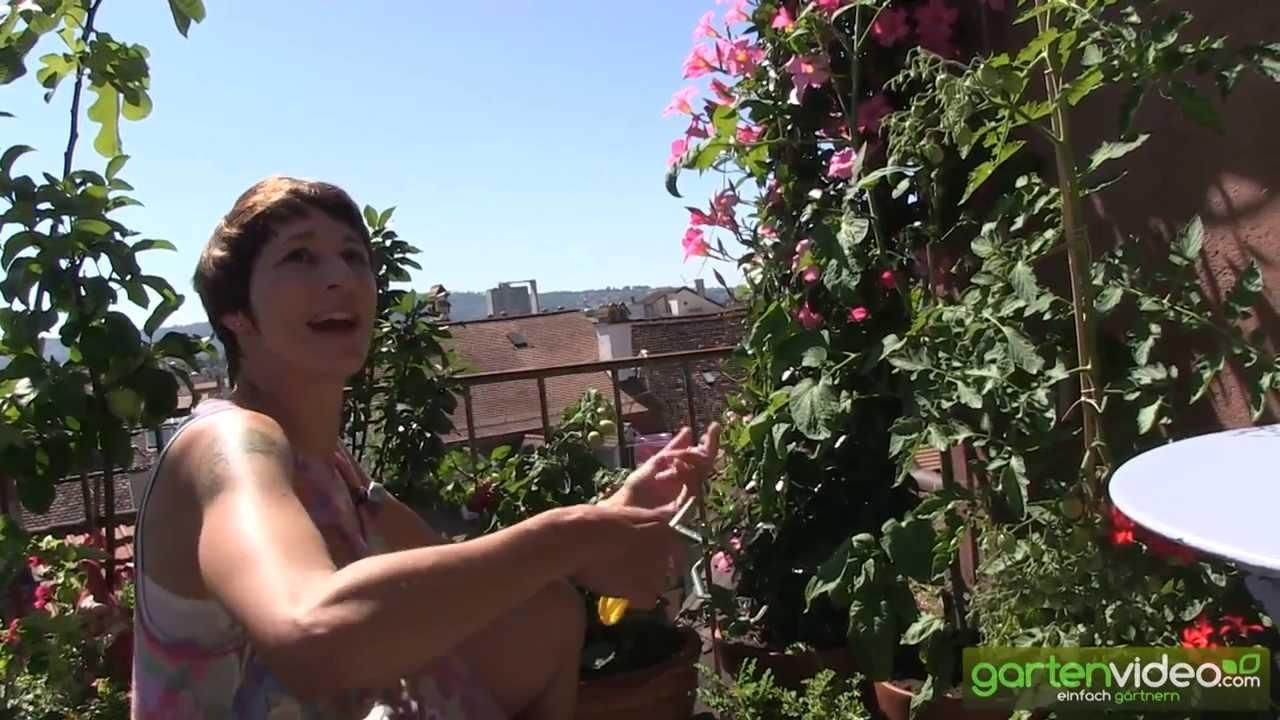 tipps und tricks zum anbau von tomaten im topf auf balkon oder, Hause und garten