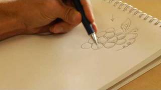 Drawing From Nature : How to Draw Fruit