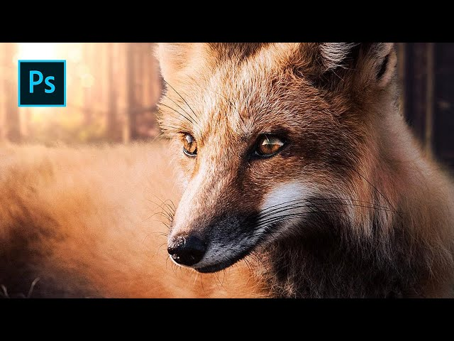 Sunset Fox - Photoshop Manipulation Tutorial