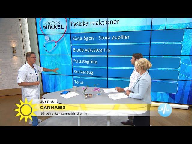 Dr Mikael – så påverkar cannabis ditt liv - Nyhetsmorgon (TV4)