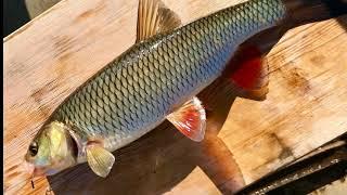 Язёвая рыбалка. Пинега