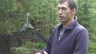 Страшные находки в лесу