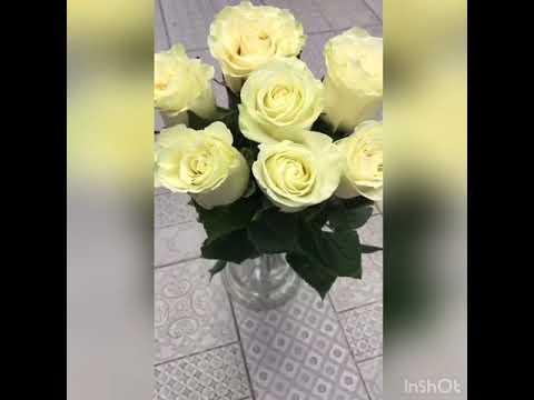 7 белых роз | Доставка цветов PION.RU