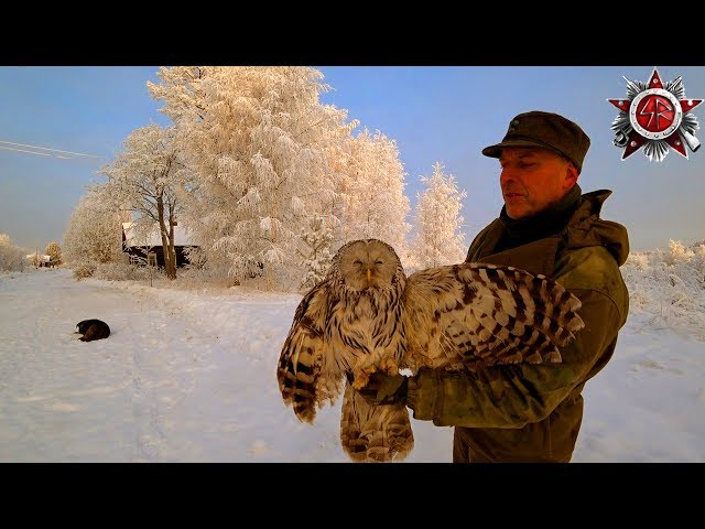 Epic Frozen Winter Wonderland 2018 Strix The Owl